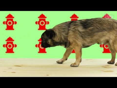 DIY Dog Leash   Crafty
