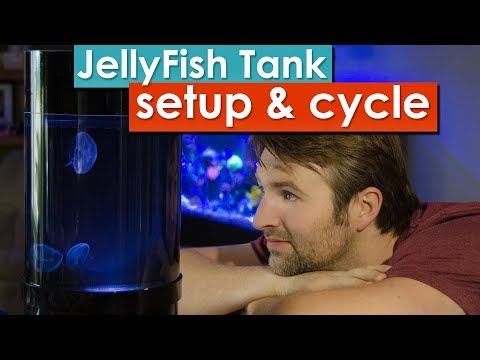 Jellyfish Tank Setup and cycling - Learn how to prepare and cycle your desktop jellyfish tank