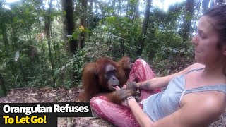 Concerning Moment Wild Orangutan Refuses To Let Go