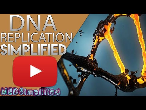 DNA Replication Made Easy