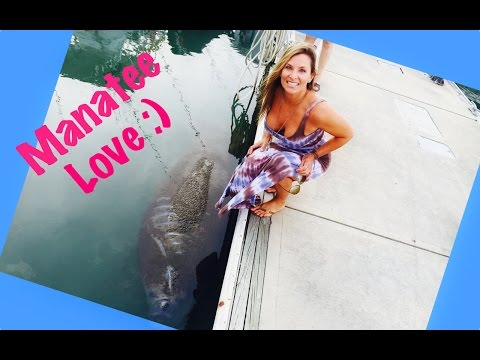 Manatee ATTACKS with love:) Must watch!