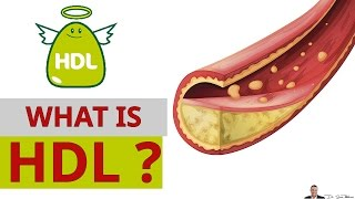 What Is Hdl Cholesterol Why It S Called The Good Cholesterol