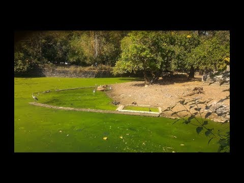 Biodiversity Despite Eutrophication in Pond, Byculla Zoo