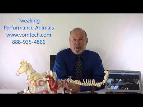 Tweaking Performance Animals