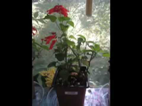 Plant Growth Science Fair Experiment