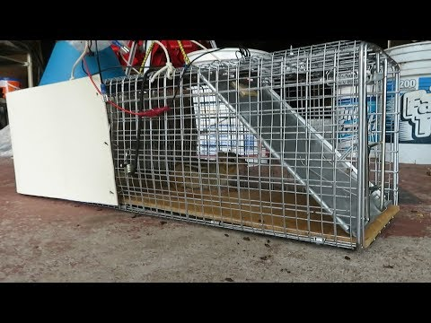 Check out this Very Effective Electrically Activated Live Animal Trap