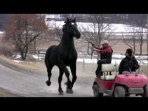 Moose March 23, 2013