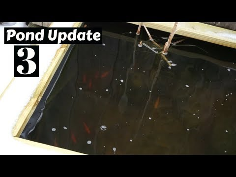 Homemade Pond Update #3 ~ How are the fish doing??