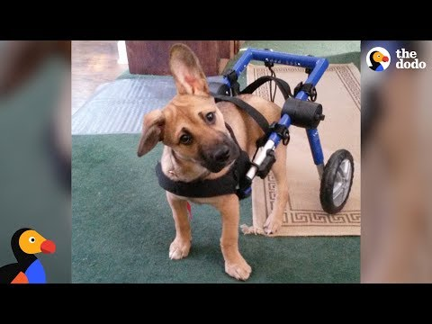 Blind Puppy Who Was Shot Adopted by Veteran - CRIXUS | The Dodo