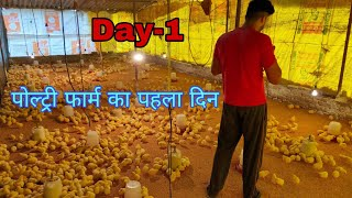 Day-1,opening of chicks in my poultry farm, Poultry Farming