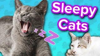 Sleepy Cats! // Funny Animal Compilation
