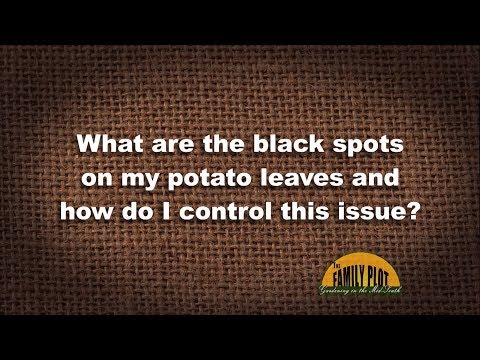 Q&A – What are the black spots on my potato leaves?