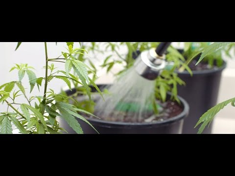 learn how to flush plants for harvest and win free hydroponic supplies