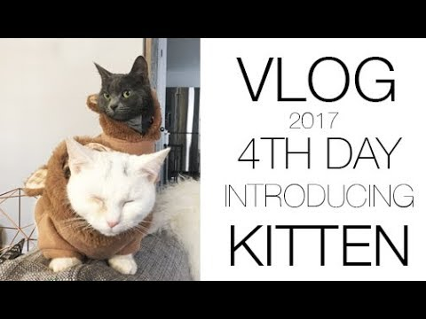 VLOG   4th Day of Introducing Kitten