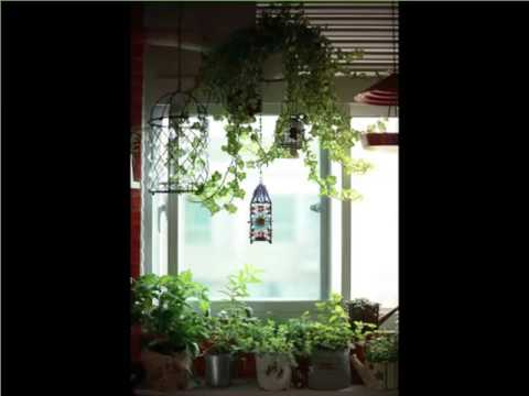 Indoor Hanging Plants Window | Indoor House Or Office Plants Picture Collection