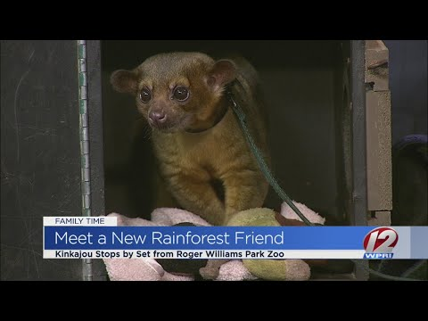 Roger Williams Park Zoo prepares for new rainforest exhibit