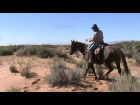 Buddy Sour Horse.wmv