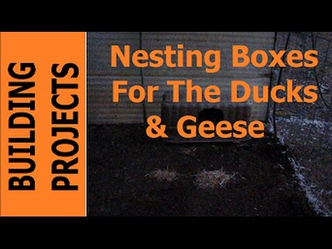 BUILDING PROJECTS - Nesting Boxes For The Ducks & Geese