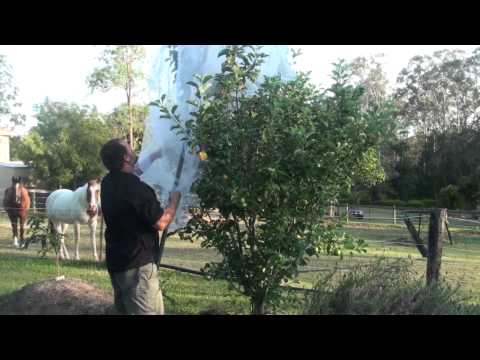 Full Apple Tree netting Demo Protect Against Fruit Fly Birds & Other Animals