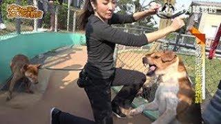 安妮美女教官 (精彩片段) - 訓練咬人狗 (Training Aggressive Dogs)