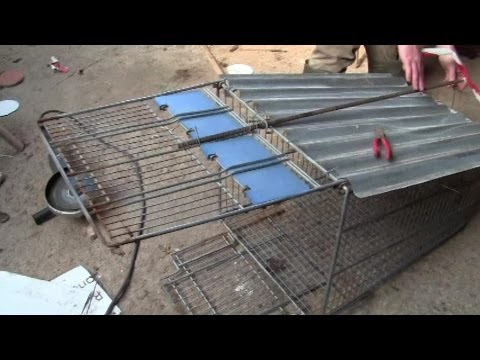 How To Make A Fox Trap From A Shopping Trolley -- And First Live Catch