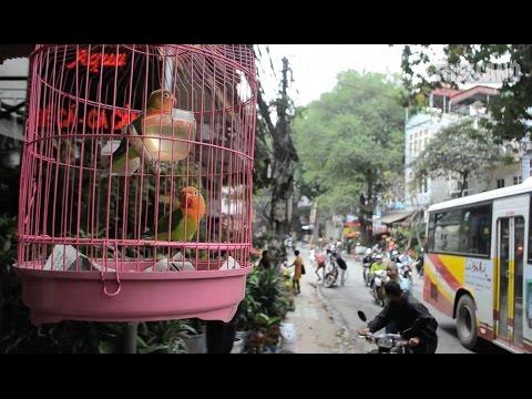 A Call for the Wild: Vietnam's Wildlife Crime Hotline