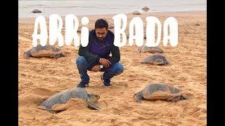 The Dancing Olive Ridley Turtles of Odisha - Arribada at Rushikulya