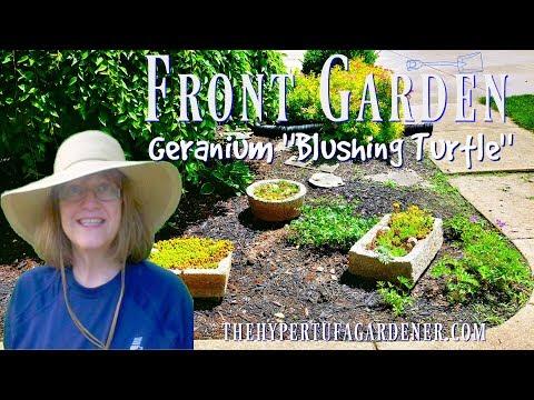 My Front Garden Planting  💐-  Geranium