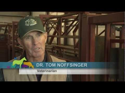 VetsOnCall - Dr. Noffsinger cures cattle suffering, ensures food safety