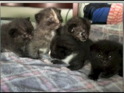 5 Rescue Kittens All In A Row & Petting Mom's Head - #10 - Feral Cat Family Socialization