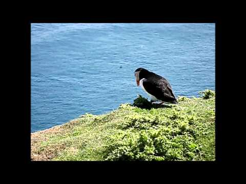 SHETLAND ISLANDS: Not only birds