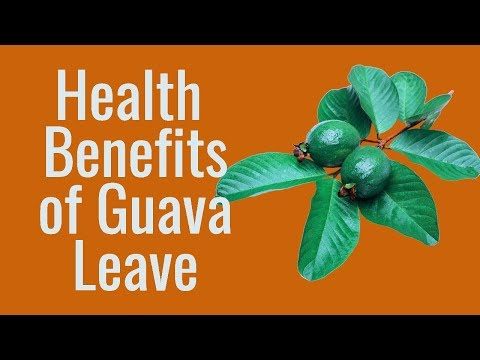 9 Health benefits of guava leave many people may not know about
