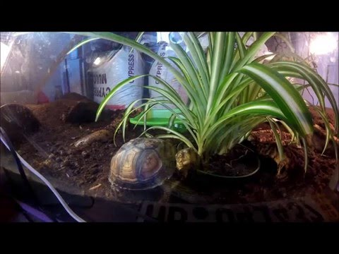 Basic Box Turtle Care
