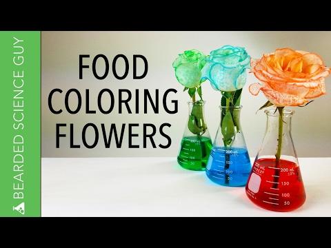 Food Coloring Flowers