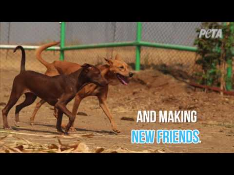 Puppy Burned by Acid Has New Friends and a New Life