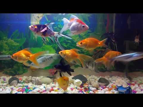 Tips to Keep Your Fish Happy, Healthy : home aquarium maintenance, snail eggs