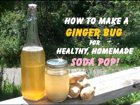 How To Make a Ginger Bug Soda Starter!