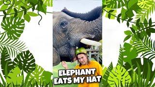 ELEPHANT EATS MY HAT ! #SHORTS