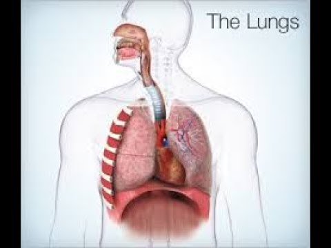Signs that Indicate Your Lungs Could be in Trouble | All About your Health
