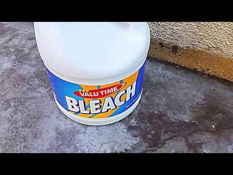 Kill Maggots With Bleach