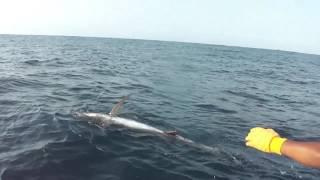 Black Marlin 🎣 170.2 Kilos Huatulco, Oax. 🇲🇽