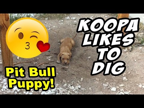 KOOPA LIKES TO DIG AND ACT CRAZY!