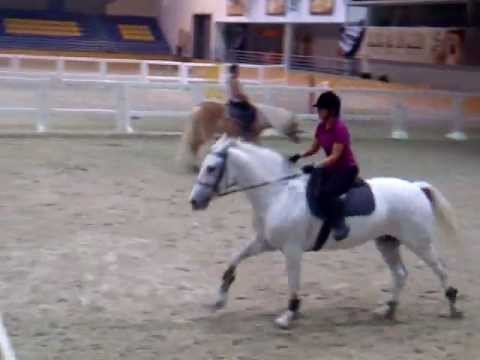 horse riding lesson jumping on molly