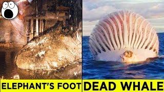 Top 10 Alarming Discoveries You