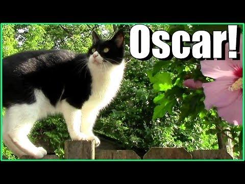 The Best of Oscar the Garden Cat (2017): cute, funny cat