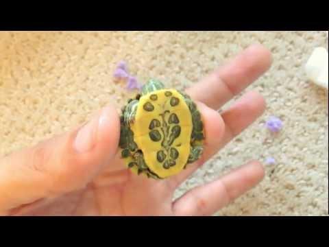 NEW! Rare Cute Baby Turtles