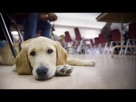 Puppy Truck: Guide Dogs for the Blind stops in Tucson