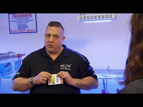 How To Care For Your Saltwater Aquarium | Tanked