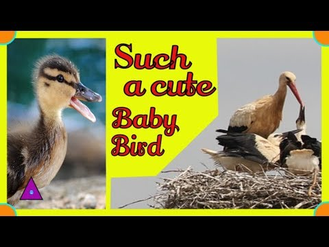 Baby Bird Chirps Away Calling for Mom
