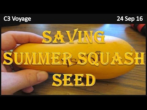 How To Save Summer Squash Seed